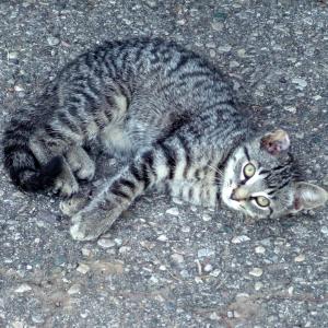 cat_1080x1080